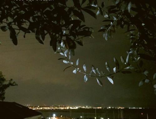 Eleni Karaindrou – Tous Des Oiseaux – ECM Records